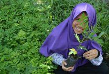 Photo of SOLIDARITY  FARMING JUAL BIBIT INDIGOFERA DAN RUMPUT ODOT